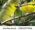 close up of beautiful bird... | Shutterstock . vector #1084397846