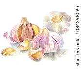 watercolor painting of a garlic | Shutterstock . vector #1084398095