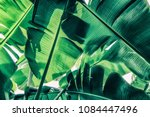 tropical banana palm leaves ... | Shutterstock . vector #1084447496