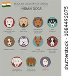 dogs by country of origin.... | Shutterstock .eps vector #1084493075