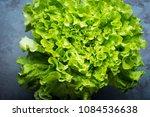 green lettuce leaves on a gray... | Shutterstock . vector #1084536638