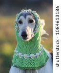 Small photo of Cute afghan dog in a hood, portrait on nature