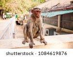 Small photo of Arunachala, Tiruvannamalai / Tamil Nadu / India, January 22, 2018: Monkey in the Sri Ramana Maharshi Ashram garden