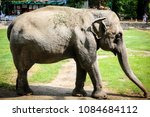 close up of an elephant inside... | Shutterstock . vector #1084684112
