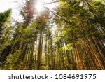 colorful mountain  forest in... | Shutterstock . vector #1084691975