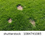 lawn has suffered damage from a ... | Shutterstock . vector #1084741085