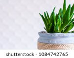 aloe plant in scandinavian... | Shutterstock . vector #1084742765