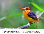 beautiful bird  oriental dwarf...   Shutterstock . vector #1084849202
