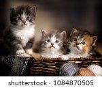 Three Kittens In A Basket...