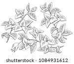Bougainvillea Flower Graphic...