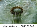 close up dandelion flower in... | Shutterstock . vector #1084932362