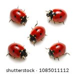collection of ladybugs isolated ... | Shutterstock . vector #1085011112