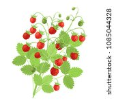 Strawberry Plant With Red...