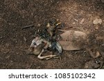 Small photo of Pity little bird dead and flys eating rotten bird.