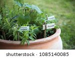 potted herb garden with plant... | Shutterstock . vector #1085140085