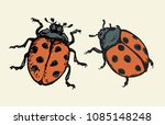 coccinellidae on white backdrop.... | Shutterstock .eps vector #1085148248