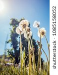 dandelions against the backdrop ... | Shutterstock . vector #1085158052