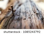a nail in the bark of a tree | Shutterstock . vector #1085243792