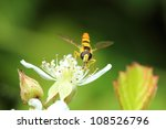 Little Hoverfly In The Nature