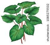 watercolor painting green... | Shutterstock . vector #1085275532