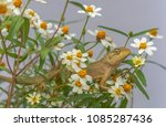 a lizard sitting in flowers... | Shutterstock . vector #1085287436