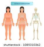 full human skeleton anatomical... | Shutterstock .eps vector #1085310362