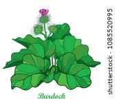 vector bush of outline burdock... | Shutterstock .eps vector #1085520995