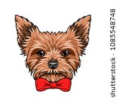 yorkshire terrier dog. red bow. ... | Shutterstock .eps vector #1085548748
