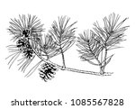 hand drawn pine tree branch... | Shutterstock .eps vector #1085567828