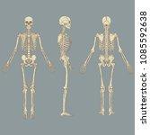 vector illustration of human... | Shutterstock .eps vector #1085592638