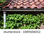 old roof tiles with green ivy... | Shutterstock . vector #1085606012