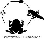 life cycle of frog. sequence of ... | Shutterstock .eps vector #1085653646