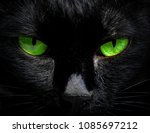 the eyes of a black cat are... | Shutterstock . vector #1085697212