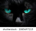 the eyes of a black cat are... | Shutterstock . vector #1085697215