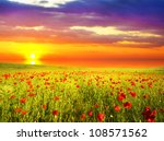 field with green grass and red... | Shutterstock . vector #108571562