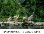 birds in jurong park  singapore | Shutterstock . vector #1085734346