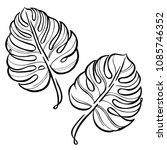 monstera contour hand drawing....   Shutterstock .eps vector #1085746352