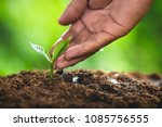 plant seeds planting trees...   Shutterstock . vector #1085756555