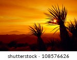 Sunset In Joshua Tree National...