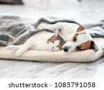 Stock photo cat and dog sleeping pets sleeping embracing 1085791058
