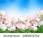 a bouquet of amazing eustoma on ... | Shutterstock . vector #1085876762