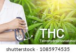 doctor image cannabis of the... | Shutterstock . vector #1085974535