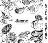 mushroom hand drawn vector... | Shutterstock .eps vector #1085987435
