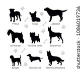 Stock vector black silhouettes of dogs on a white background schnauzer pit bull beagle dachshund german 1086019736