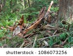 the splintered remains of a... | Shutterstock . vector #1086073256