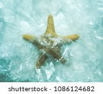 starfish aquatic animal trapped ... | Shutterstock . vector #1086124682