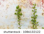 rusted beige painted metal wall ...   Shutterstock . vector #1086132122