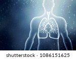 healthy human lungs 2d... | Shutterstock . vector #1086151625