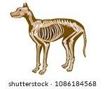 dog skeletal anatomy poster....   Shutterstock .eps vector #1086184568