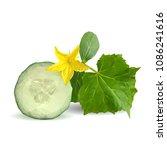 fresh  nutritious  tasty green... | Shutterstock .eps vector #1086241616
